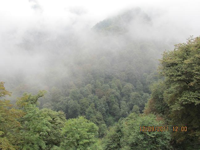 قلعه رودخان- جنگل مه آلود